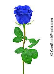 bleu, rose