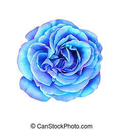 bleu, rose, turquoise, fleur
