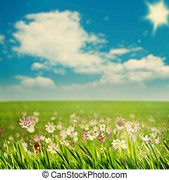 bleu, saisonnier, herbe, pré, beauté, fleurs, arrière-plans, vert, sous, cieux