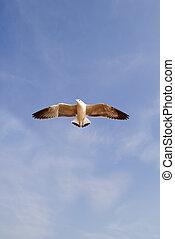 bleu, seagull vole, ciel, contre