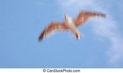 bleu, seul, seagull vole, ciel