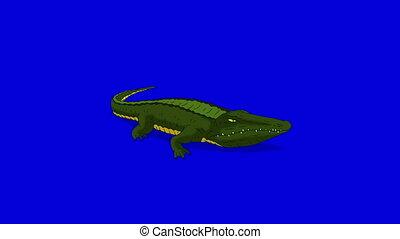 bleu, sien, alligator, écran, isolé, mouvement, crocodile, graphique, animé, mouth., ouvert