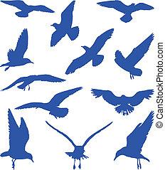 bleu, silhouettes, mouettes, oiseaux