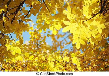 bleu, sky., feuilles, arbre, jaune, automne, sur