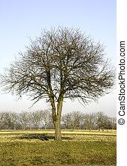 bleu, sky., feuilles, arbres, sans, contre