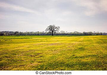bleu, solitaire, ciel, arbre, ensoleillé, champ