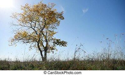 bleu, solitaire, nature, ciel, arbre, automne, fond