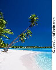 bleu, sur, ciel, arbres, paume, lagune, pendre