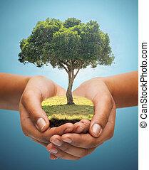 bleu, tenue, arbre, sur, chêne, vert, fond, mains