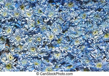 bleu, ter, fleurs