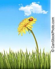 bleu, vector., pissenlit, ciel, arrière-plan vert, ladybug., herbe