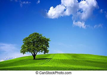 bleu, vert, ciel, paysage,  nature