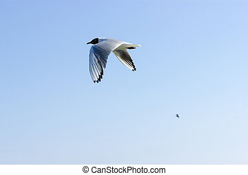 bleu, voler, ciel, contre, mouette, oiseau