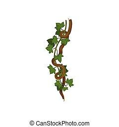 bliźni, dookoła, winorośl, ilustracja, tło., wektor, branch., biały