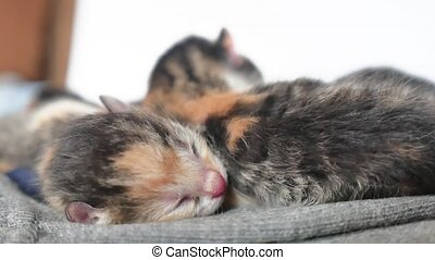 blind kittens with closed eyes. cute cats are lying asleep....