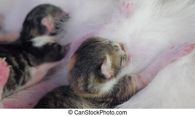 blind kittens with closed eyes. cute cats are lying...