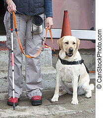 Blind person with her guide dog - A blind person is led by ...