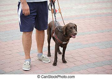 blinde person, mit, blindenhund