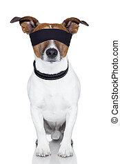 blindfold dog cover eyes - blindfold dog covering both eyes