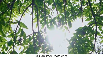 Sun shining through branches with leaves - Blinking Sun...
