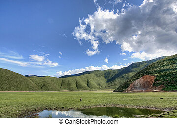 Meadow in Shangrila county in Yunnan province, China
