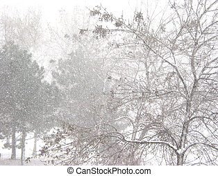 Blizzard and trees - Snow storm and trees