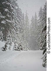 Heavy snow storm in a pine forest
