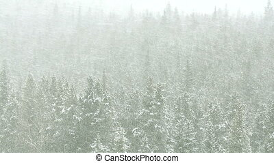 Blizzard in the forest 03