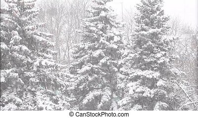 Blizzard in the forest of Christmas trees