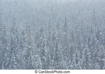 Blizzard in the forest