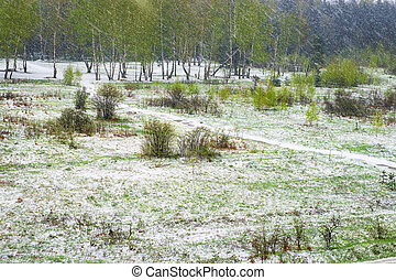 Blizzard in the spring. Green and snowy abstract landscape with flying snow