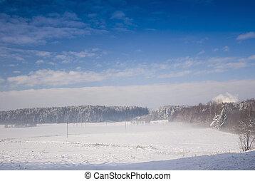 blizzard in winter meadow