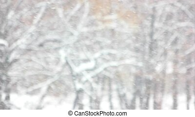 Blizzard on winter forest background. Close up snowfall on...