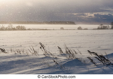 Blizzard sunshine and windy dramatic weather at winter meadows in Russia landscape