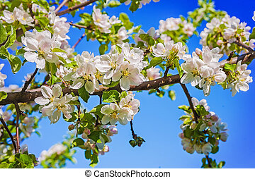 bllosoming of apple tree on sky background instagram stile