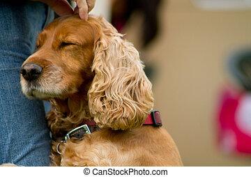block, foto, mänsklig, hund, älskande