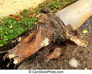 Blocked drainage pipe caused by ingress of tree roots
