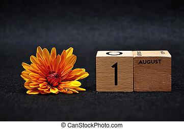 blocs, août, bois, 1, arrière-plan noir, pâquerette, orange