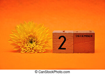 blocs, bois, décembre, jaune, 2, fond, pâquerette, orange