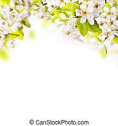 bloeien, appel