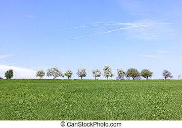 bloeien, bomen, in een rij, op, de, horizon