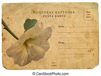 bloeiende bloem, van, mallow., oud, postkaart