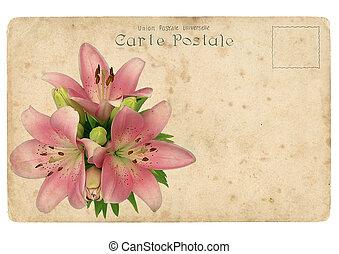 bloeiende bloem, van, roze, lily., oud, postkaart