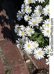 bloeiende bloemen