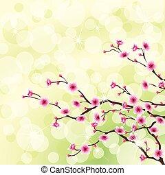 bloeiende boom, achtergrond