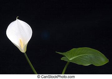 bloem, blad