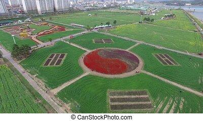 bloem, canola, changnyeong, straatfeest, azie, namji, korea, yuchae, zuiden