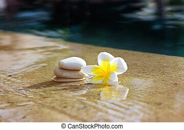 bloem, en, stenen, in, hotel, spa