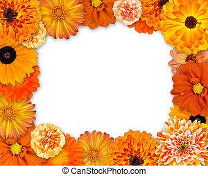 bloem, frame, met, oranje bloemen, op wit