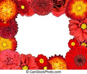 bloem, frame, met, rode bloemen, op, leeg, achtergrond